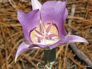 Bootahnie Valley flower